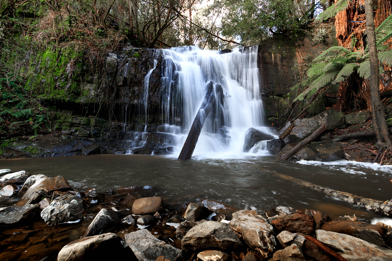 Lilydale Falls (1st waterfall)