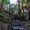 The steps leading to Horseshoe Falls