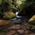 Downstream from Lady Barron Falls