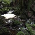 Punna Falls Creek