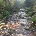 Minnow River